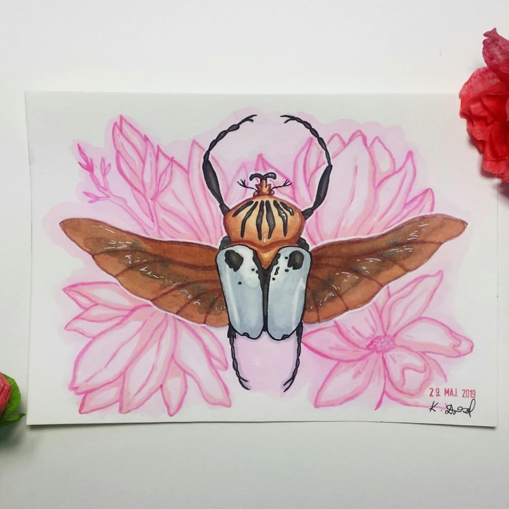 Żuk ilustracja Turdus Concept
